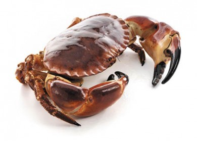 brown crab ireland