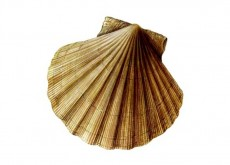 King Scallop Ireland