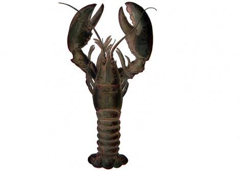 lobster-ireland