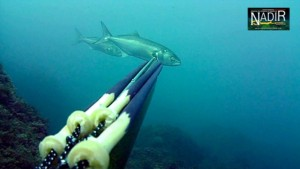 spearfishing-italy